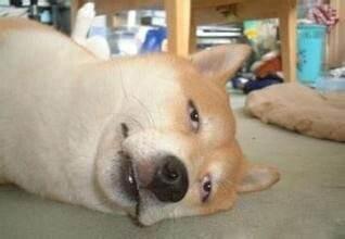 神吐槽:房价高 为何背锅的总是单身狗