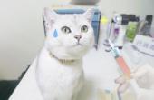 记录猫咪打疫苗全过程