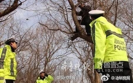 见过奇葩的酒司机,您可能没见过这么奇葩的!23日,青岛交警潍莱高速公路大队的民警在沈海高速南村收费站进行酒后驾驶机动车集中整治行动。一名酒司机为了试图躲避交警的处罚,独自一人爬上了高约十几米的大树,让人忍俊不禁。