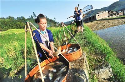 广西柳州通过农业供给侧改革,使绿色食材走出深山成了俏销品。 新华社记者 李斌摄