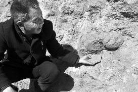 """华商报讯(记者 陈永辉 摄影 闫文青)村民修路时意外发现,路边沟渠坡土中镶嵌着几枚碗口大小椭圆形的""""石疙瘩"""",外表还有残损蛋壳碎片。接到村民报告后,文保专家赶到现场,初步辨认""""沙石块""""为恐龙蛋化石。"""