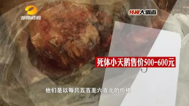 警方最终确认了野味馆梁某收购的天鹅来自于张某,立即对张某展开了调查。