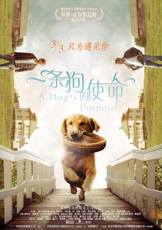 《一条狗的使命》首周末票房破亿众明星力挺