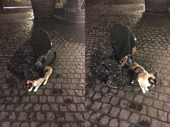 蔡依林与猫咪互动