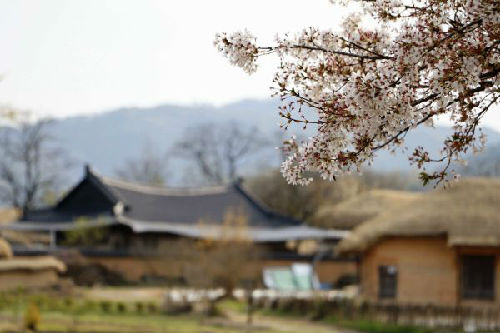 韩国旅游景点安东河回村 新华社记者姚琪琳摄