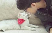 猫咪讨厌哪些食物气味