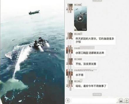 """近日,这头国家二级保护动物鲸鲨因被潜水员姚某在网上议论其鱼翅价格而倍受关注。相关视频中,鲸鲨被几名潜水员围住,一条绳子拴住鲸鲨的尾鳍。姚某声称这是鲸鲨捕捞画面。但事后又改口称自己是""""开玩笑""""。"""