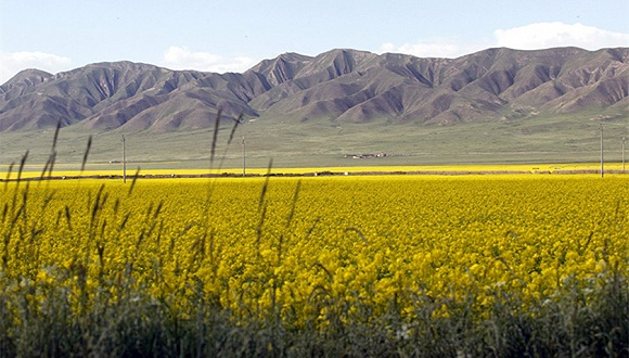 三江源自然保护区风光。图片来源:视觉中国