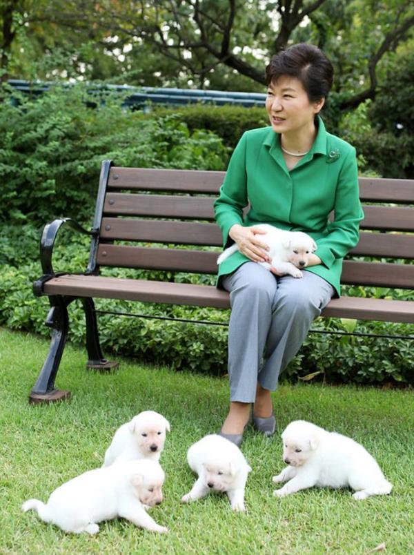 2015年9月20日,朴槿惠发布与珍岛犬幼犬在青瓦台的合照。