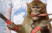 淘气小猴报复耍猴人