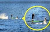 皮划艇爱好者偶遇座头鲸