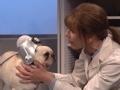 《周六夜现场第42季片花》第十六期 狗戴高科技设备说人话 斯嘉丽借宠物狗讽刺川普