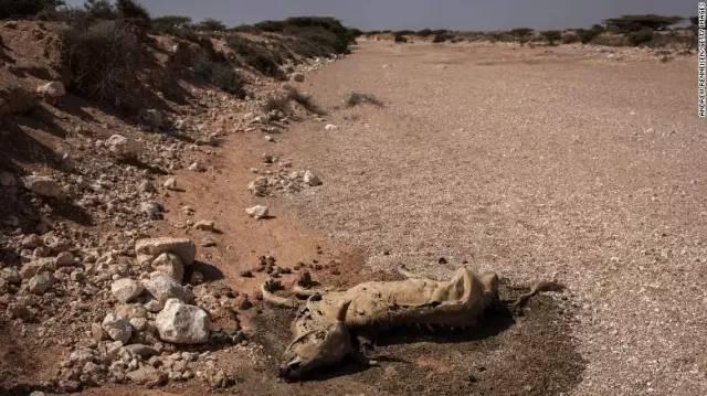 路边因干旱而死去的山羊。
