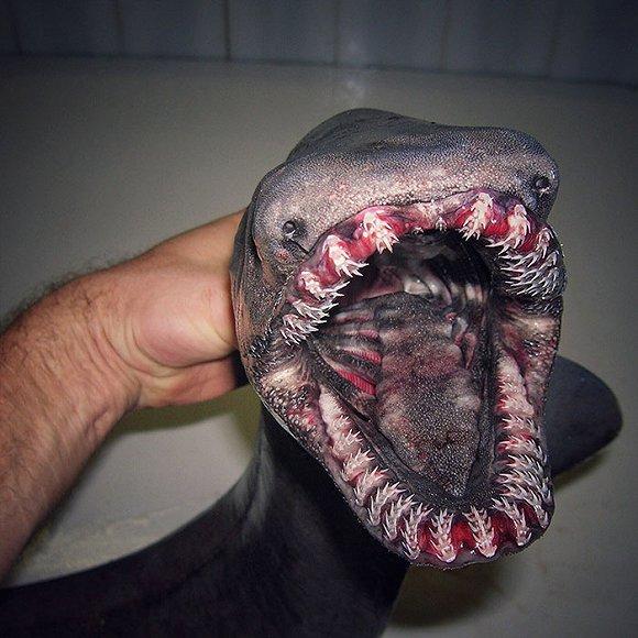 虽然没机会亲眼看到,但从照片里,我们就已经深刻地认识到了,海底的家伙们,长得实在都太奇怪了……(皱眉)