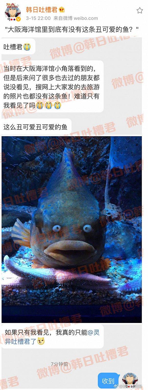 来感受一下这条鱼的凝视……