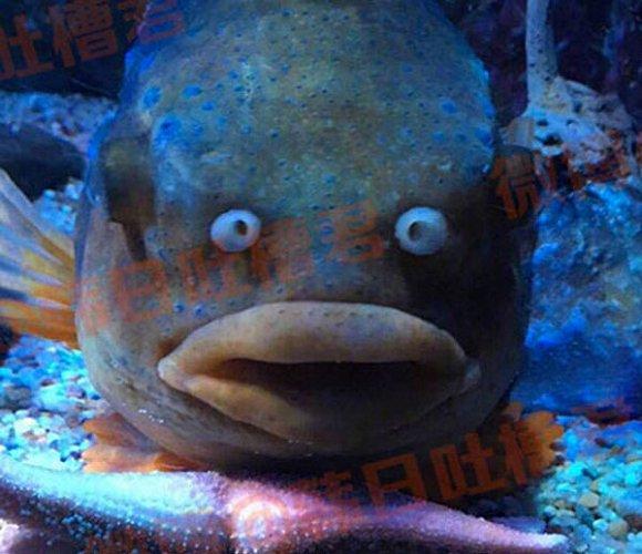 这么一条让人过目不忘的蠢鱼,不可能没有别人发现啊。