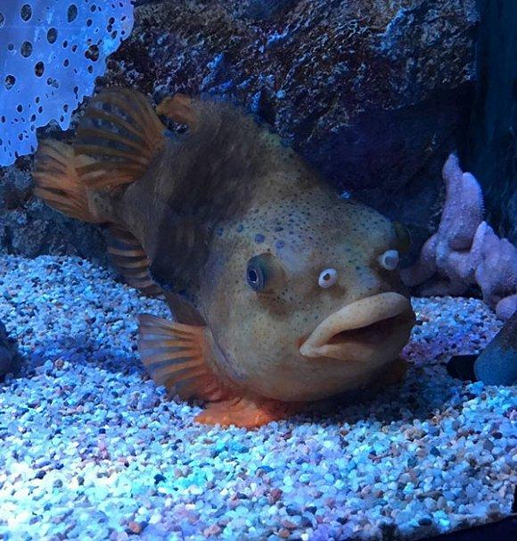 你发现了吗……我们以为是眼睛的地方,其实,是鱼的鼻孔。