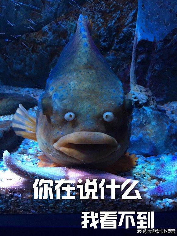 海洋生物太邪性了