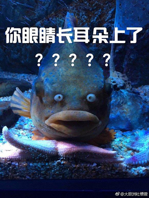 本以为这件事就完了,但大家在交流的过程中发现,不光是大阪海洋馆,哪个海洋馆还没有条丑鱼么?