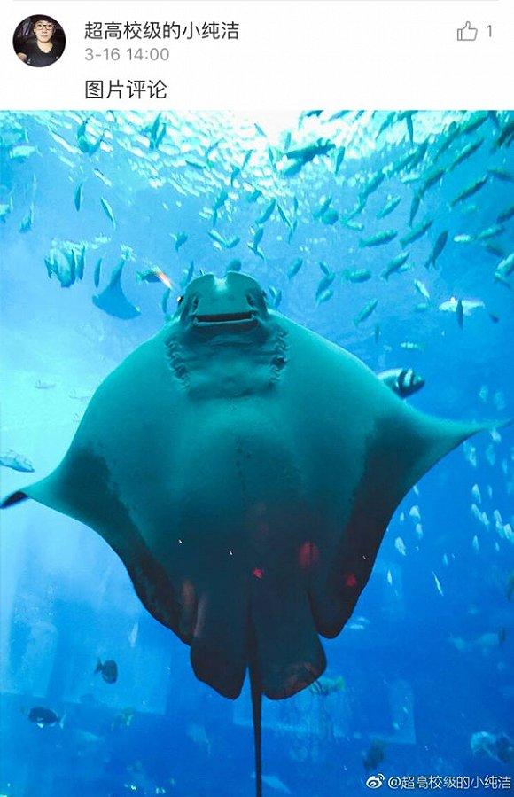 好了,下次去海洋馆,记得也要拍一些奇奇怪怪的邪性生物呀。