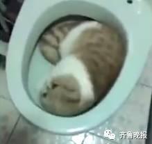 大婶训斥马桶睡觉的猫:方翠花你给我出来