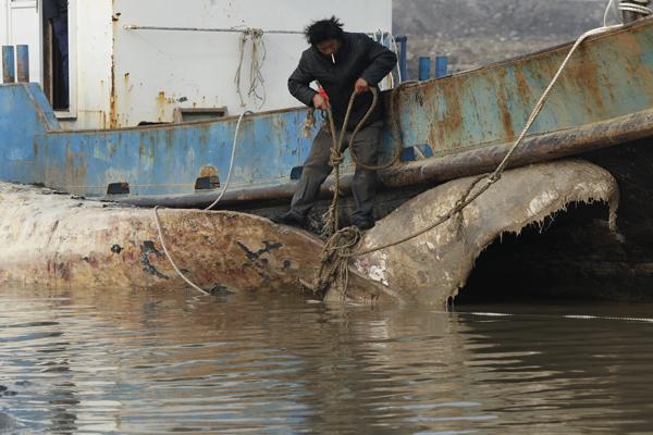 cf幽灵怎么卡枪上海死亡鲸鱼被拖至码头 解剖工