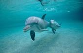 大海邂逅野生海豚