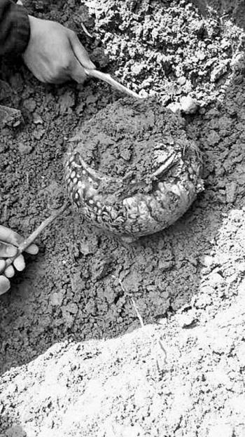 散步发现唐代墓葬