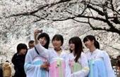 美女大学生穿古装赏樱
