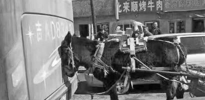"""新文化讯 3月26日上午,济南市公安局的官方微博""""济南公安""""发布了一条微博:""""世事多奇葩,毛驴怼大巴。毛驴:不服来战!大巴:容你战我千百回,受伤的驴总是你啊!""""。并随文附上了一张毛驴撞大巴车的图片。只见一头黑色毛驴头部顶撞到一辆红褐色大巴车后尾部,大巴车车牌号为吉A开头,镜头内的建筑为门市平房,商户林立。"""