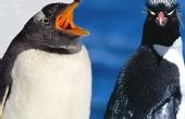 让人哭笑不得的企鹅