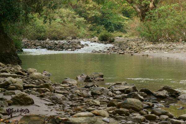 绿孔雀河谷栖息地。 婉蓉 图