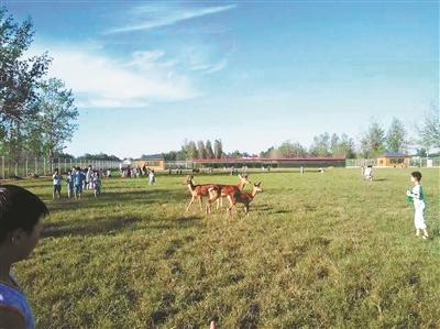 封丘县实新学校的学生们下课后可以与动物近距离接触