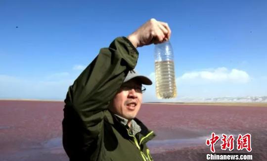 """青海湖小湖泊变成""""粉红湖""""官方排除环境污染"""