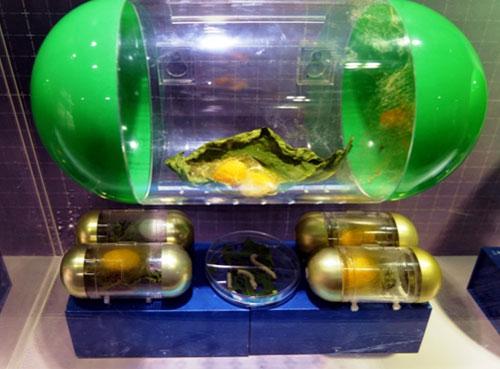 太空蔬菜及太空蠶展示