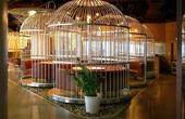 高校食堂变身鸟笼餐厅