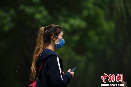 北京全面开展杨柳絮清理工作 严禁焚烧处理(图)