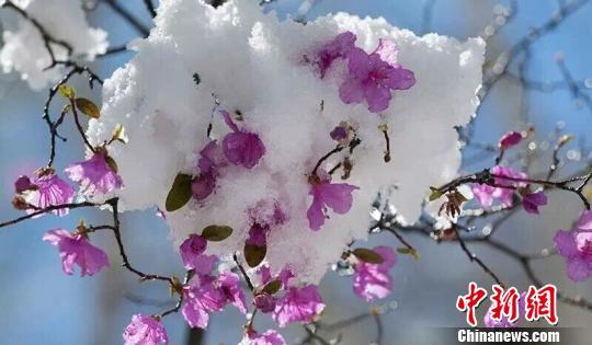 图为大雪过后的内蒙古额尔古纳。 韩金龙 摄