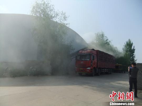 中储粮光武分库正在组织车辆将已经变质的小麦运走。