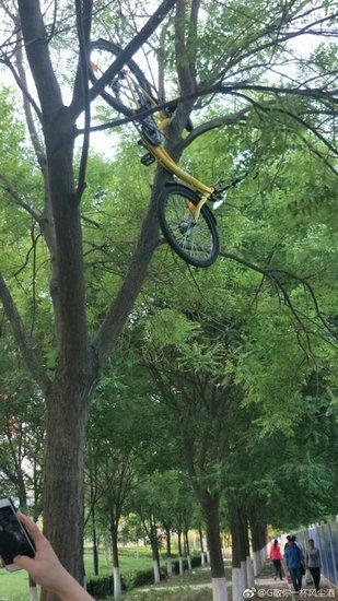 """大兴一ofo共享单车被挂树上近一周 工作人员爬树将其""""解救"""""""