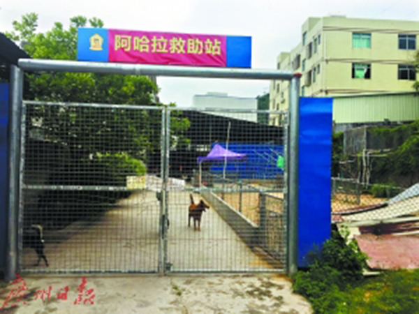夫妻卖深圳两套房救助百余流浪狗屡因投诉为狗搬家