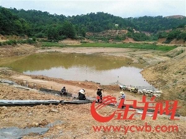 三十亩水田变山塘。 金羊网 图