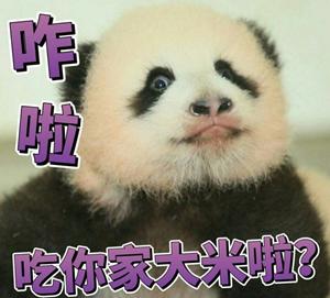 四只熊猫宝宝越狱萌翻了 英国每日邮报天天靠熊猫吸粉
