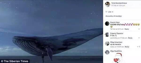 """尤利娅在自己的INS上留下了""""结束""""的字样,并配上了一张蓝鲸的图片。 图片来自俄罗斯《西伯利亚时报》。"""