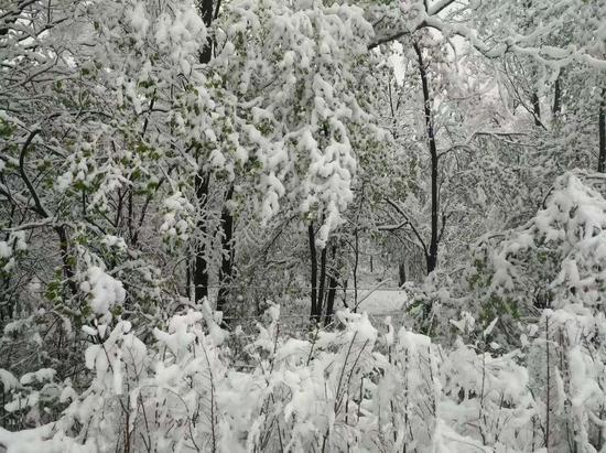 昨晚,吉林白山部分山区飘起了雪花,长白山被皑皑白雪覆盖,仍是一片冬天的景象。长白山下的锦江木屋村中,在白雪的映衬下刚刚绽放的花朵显得更加鲜艳,在这里,你可以看到冬天和春天并存的奇特景色。