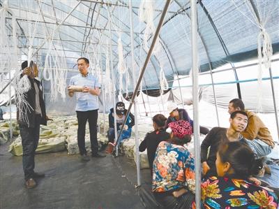 彭君(中)正在为村民提供技术指导。本报记者 杨学义 摄