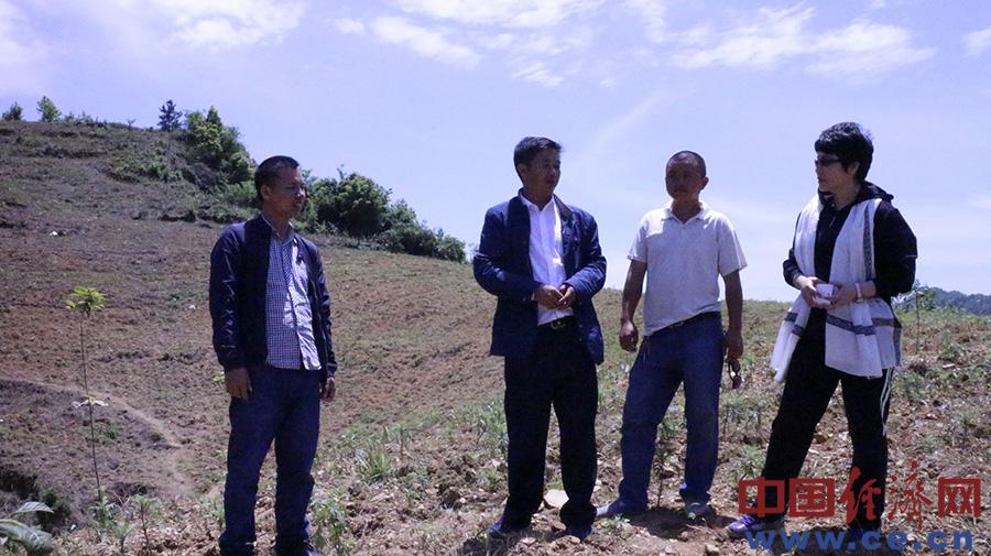 村干部在任光先的种植基地上