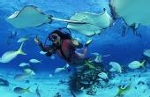 《水底下的国家公园》