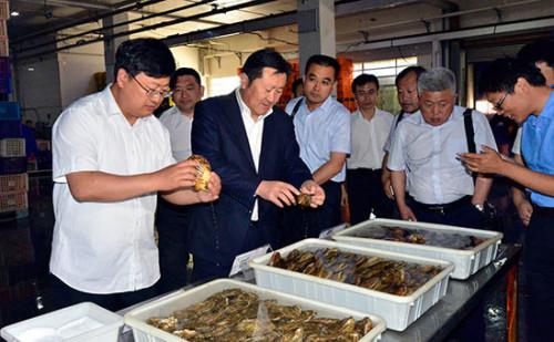 獐子岛建设乳山海洋牧场 政企合作打造精品牡蛎基地