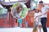 贵州黔灵山公园猴子称霸